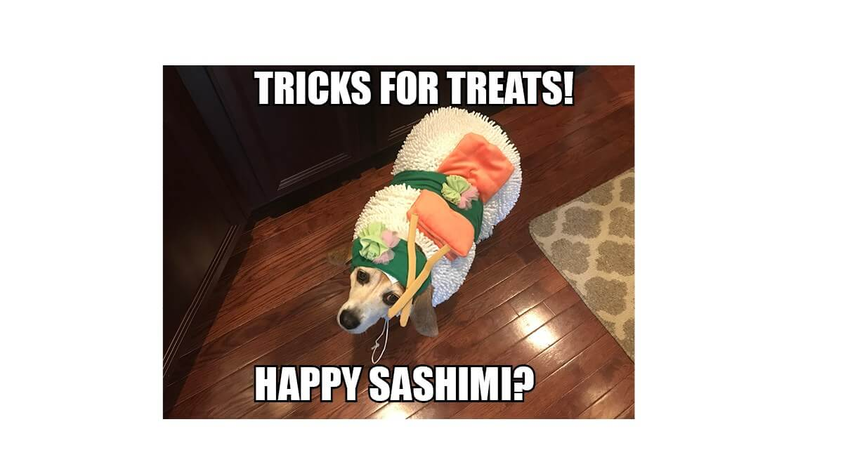 Adorable puppy dressed as a sushi roll.
